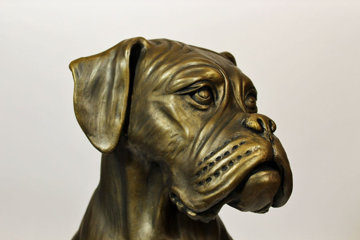 Cassius - Full size Boxer commission. - head detail